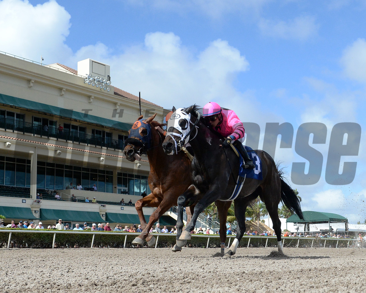Conquest Windycity, Jose Ortiz, Mind Your Biscuits, Irad Ortiz Jr., AOC, Gulfstream Park, February 9 2018, Conquest Windycity (inside in purple) won the race