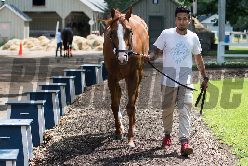 Good Magic arrives at Saratoga Race Course on Monday,  July 30, 2018<br /> Photo: Skip Dickstein