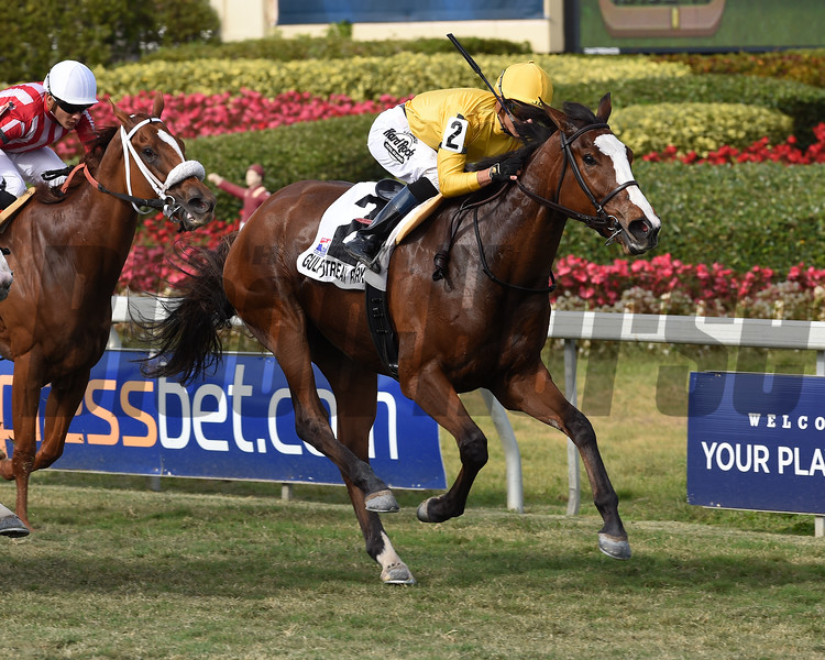 Lull wins the 2018 Honey Fox Stakes<br /> Coglianese Photos