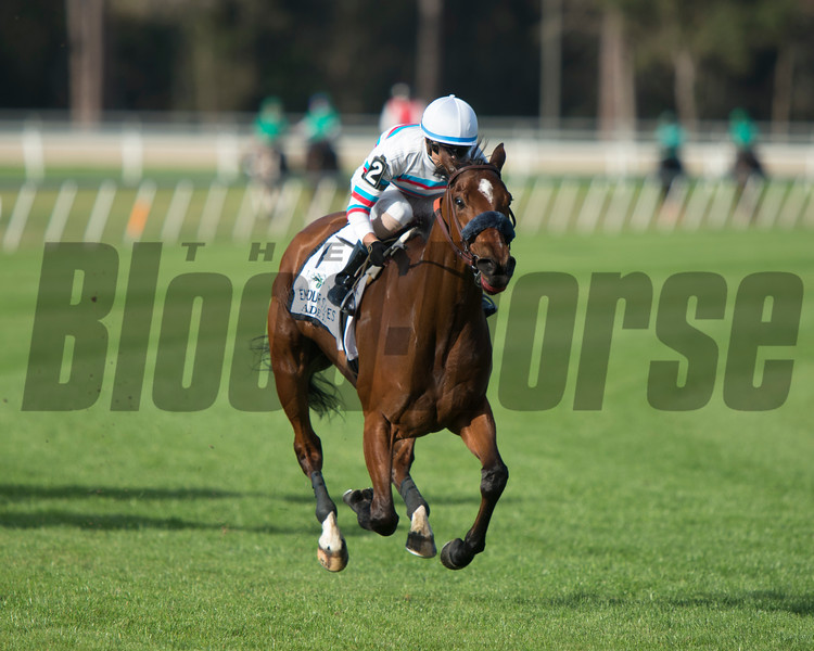 Dona Bruja. [Arg] with Jose Ortiz  wins The Lambholm South Endeavour Stakes  @ Tampa Bay Downs.; © Joe DiOrio/Winningimages.biz