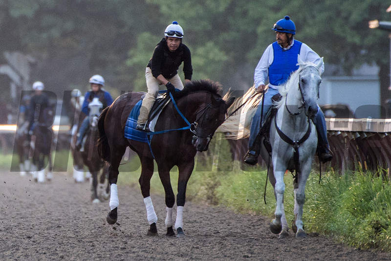 Well know horse Bolt D'Oro, left goes out with his trainer Steve Asmussen at the Oklahoma Training Track Thursday  Aug. 9, 2018 in Saratoga Springs, N.Y.(Skip Dickstein