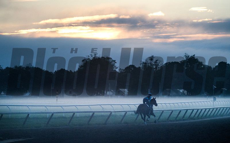 Morning exercise on the Oklahoma Training Center track Wednesday Aug. 15, 2018 in Saratoga Springs, N.Y.  Photo by Skip Dickstein