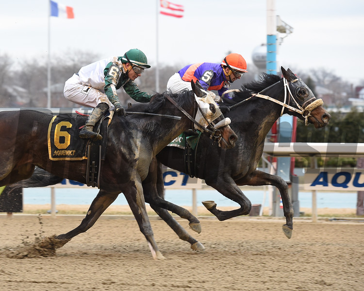 Aunt Babe wins the 2018 Franklin Square Stakes<br /> Coglianese Photos/Chelsea Durand
