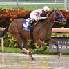Mo Cash wins the 2018 Benny The Bull Stakes<br /> Coglianese Photos/Lauren King