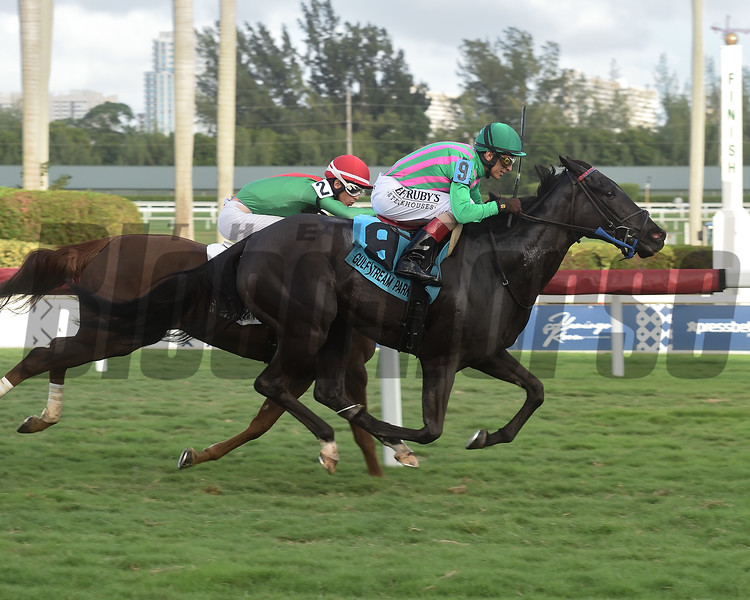 Touriga wins the Via Borghese Stakes Saturday, December 28, 2019 at Gulfstream Park. Photo: Coglianese Photos/Lauren King