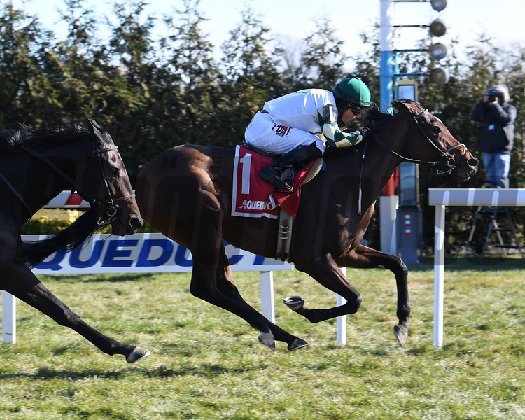Feel Glorious wins the 2019 Winter Memories Stakes at Aqueduct<br /> Coglianese Photos/Susie Raisher
