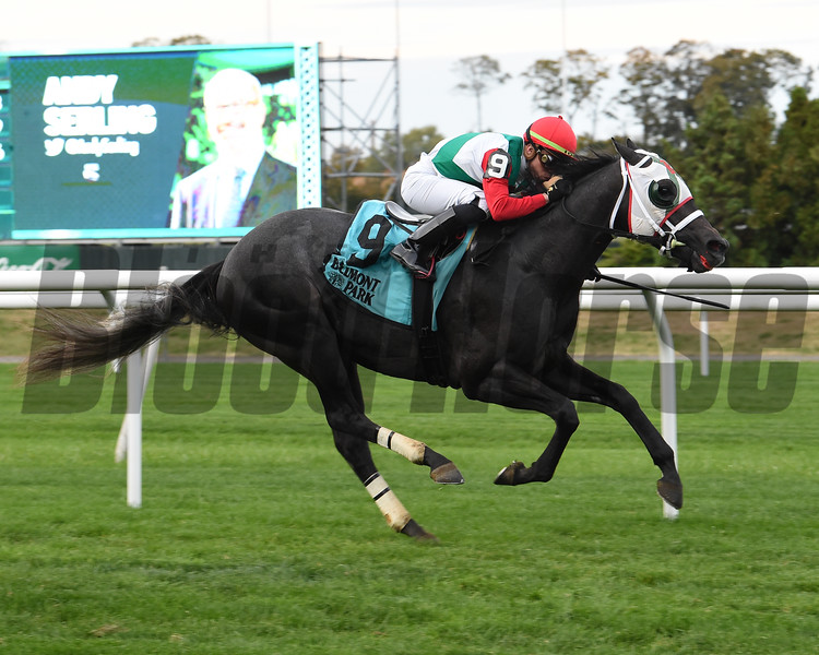 Buy Land and See wins the 2019 Awad Stakes at Belmont Park<br /> Coglianese Photos