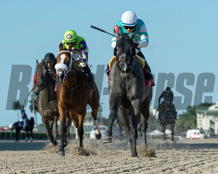 Spanish Point wins the 2019 House Party Stakes at Gulfstream Park<br /> Coglianese Photos/Ryan Thompson