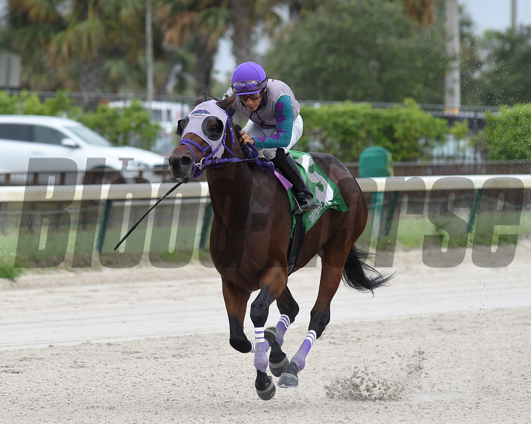 Travy Boy wins the 2019 Millions Sprint Preview Stakes at Gulfstream Park West   <br /> Coglianese Photos/Ryan Thompson