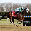 Pauseforthecause wins the 2019 Garland of Roses Stakes at Aqueduct<br /> Coglianese Photos/Chelsea Durand