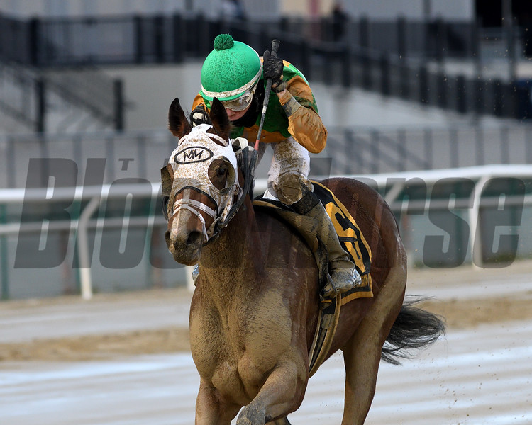 A Freud of Mama wins the 2019 New York Stallion Series Stakes<br /> Coglianese Photos/Chelsea Durand