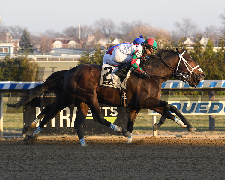 Firenze Fire wins the 2019 Gravesend Stakes at Aqueduct. Photo: Coglianese Photos/Susie Raisher