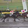 Dieu du Vin wins the 2019  Cattleya Sho at Tokyo Racecourse  <br /> Katsumi Saito Photo