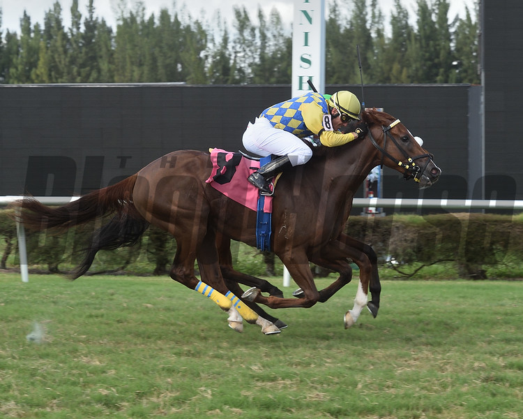 El Gran Cacao wins a maiden claiming race October 14, 2019 at Gulfstream Park West. Photo: Coglianese Photos/Lauren King