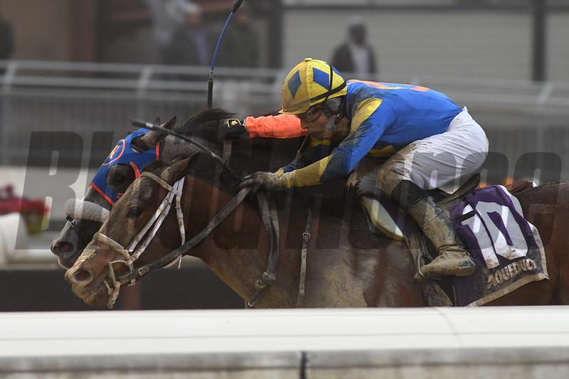 Bank On Shea wins the 2019 New York Stallion Series Stakes<br /> Coglianese Photos/Elsa Lorieul