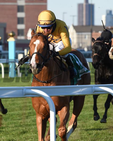 Curlin's Honor wins the 2019 Artie Schiller Stakes at Aqueduct<br /> Coglianese Photos/Elsa Lorieul