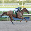 War Story wins the 2019 Harlan's Holiday at Gulfstream Park<br /> Coglianese Photos/Lauren King