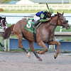 War Story wins the 2019 Harlan's Holiday at Gulfstream Park<br /> Coglianese Photos