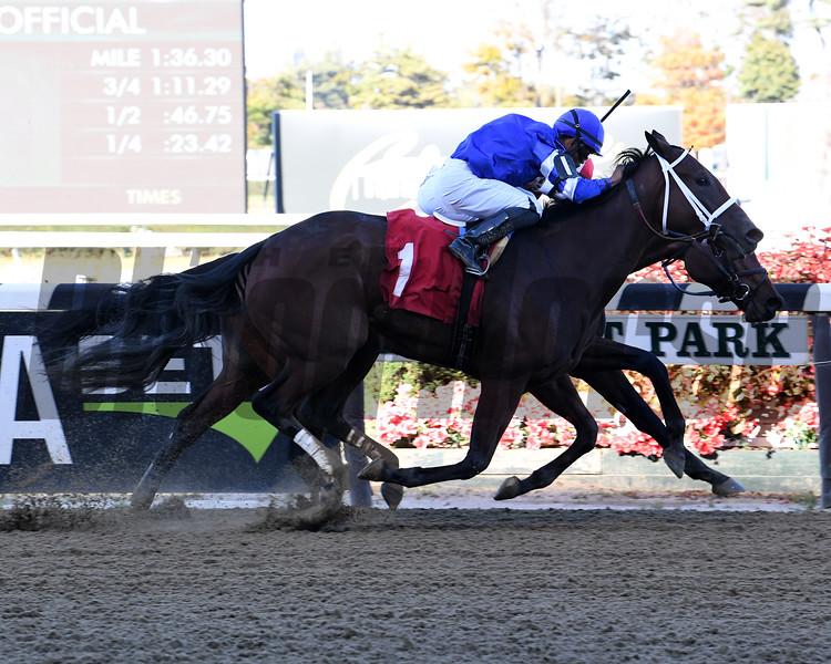 Trial and Error - Maiden Win, Belmont Park, October 24, 2019<br /> Coglianese Photos