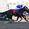Trial and Error - Maiden Win, Belmont Park, October 24, 2019<br /> Coglianese Photos