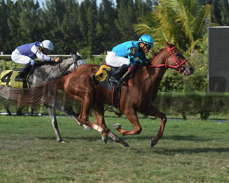 Normas Love wins a maiden special weight at Gulfstream Park West. Photo: Coglianese Photos/Lauren King
