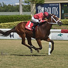 Cajun Casanova wins the 2019 Hollywood Beach Stakes at Gulfstream Park<br /> Coglianse Photos/Lauren King