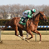 Mr. Buff wins the 2019 Alex M. Robb Stakes at Aqueduct<br /> Coglianese Photos/Chelsea Durand
