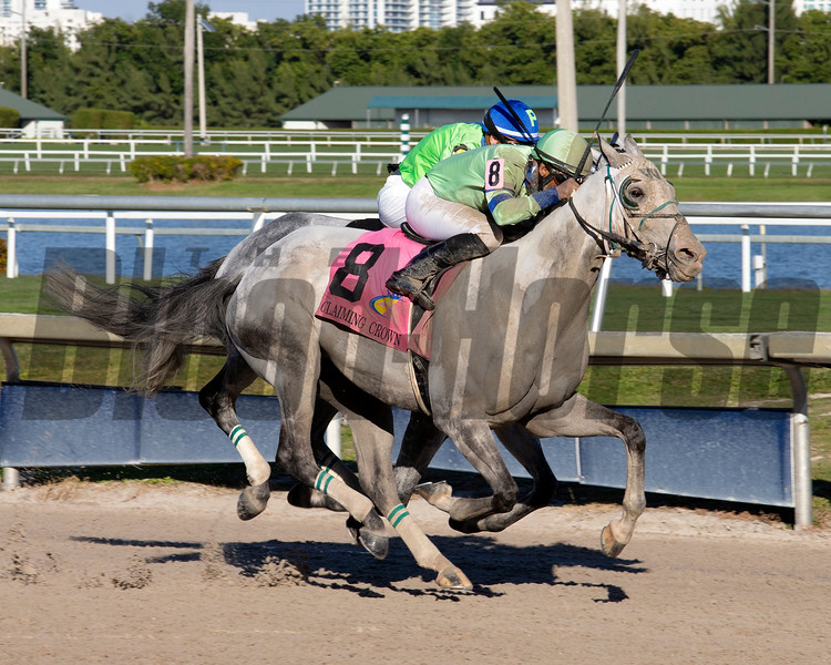 Yes I See wins the 2019 Claiming Crown Iron Horse at Gulfstream Park<br /> Coglianese Photos/Andie Biancone