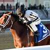Bellera wins the 2019 Comely Stakes at Aqueduct<br /> Coglianese Photos/Elsa Lorieul