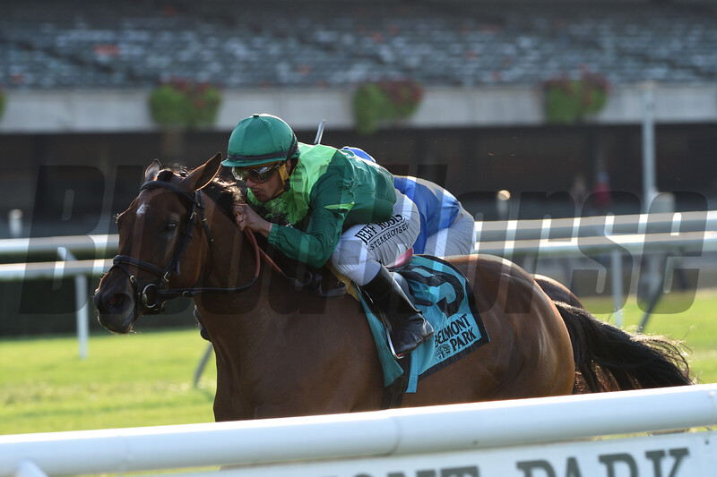 Fifty Five wins the 2019 John Hettinger Stakes at Belmont Park<br /> Coglianese Photos/Chelsea Durand