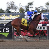 Ashaar - Maiden Win, Belmont Park, October 12, 2019<br /> Coglianese Photos