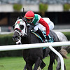Buy Land and See wins the 2019 Awad Stakes at Belmont Park<br /> Coglianese Photos/Chelsea Durand