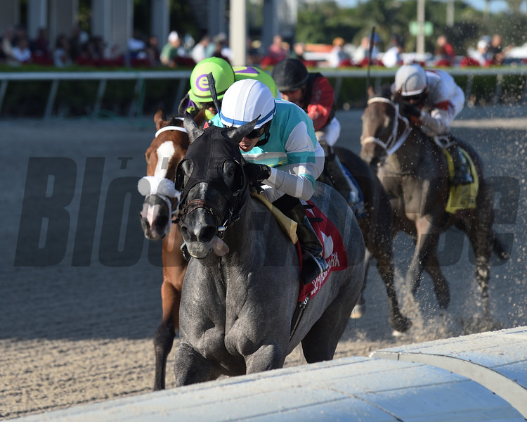 Spanish Point wins the 2019 House Party Stakes at Gulfstream Park<br /> Coglianese Photos/Derbe Glass