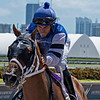 Flawless Moon - Maiden Win, Gulfstream Park, September 28, 2019<br /> Samy Camacho aboard<br /> Coglianese Photos/Ryan Thompson