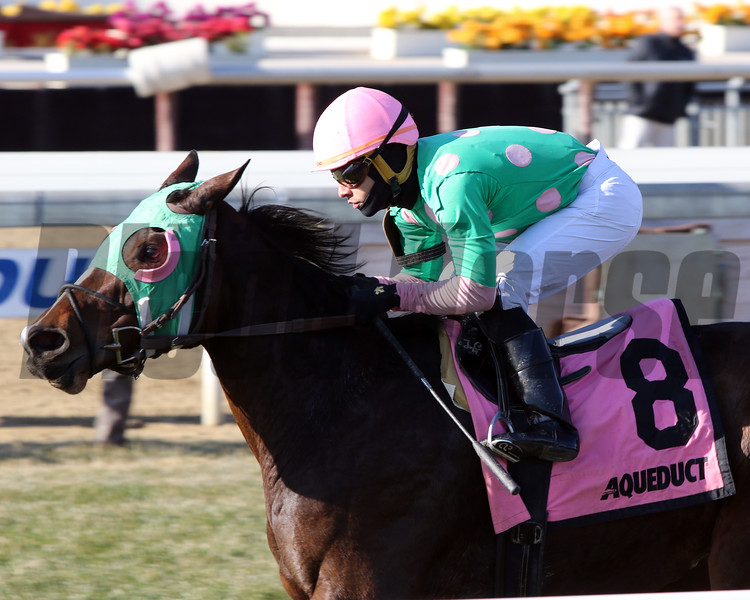 Saratoga Treasure with Eric Cancel win the 3rd Running of the Autumn Days at Aqueduct on December 7, 2019. Photo By: Chad B. Harmon