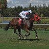 Flash Money - Maiden Win, Gulfstream Park West, October 23, 2019<br /> Coglianese Photos/Lauren King