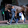 Rushing Fall<br /> at Keeneland.