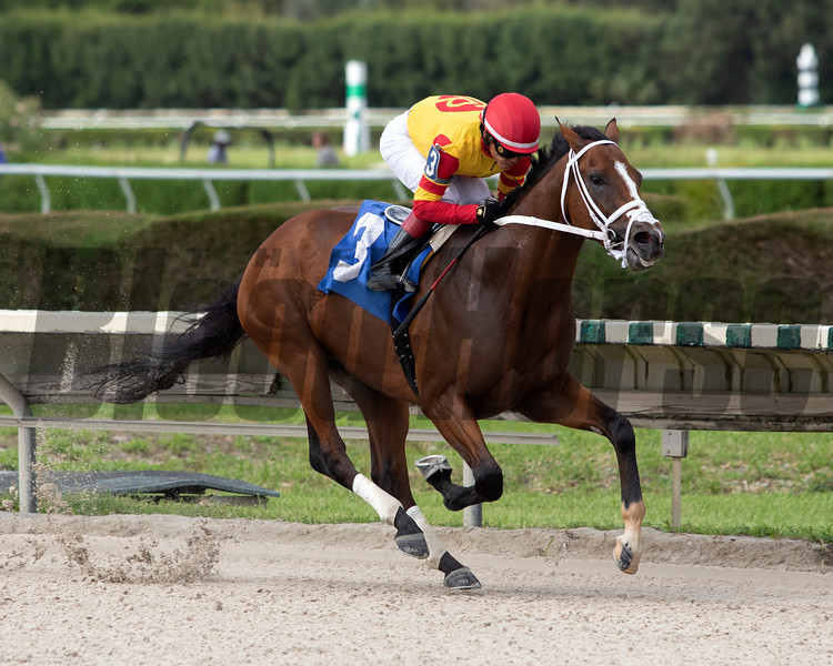 Bodexpress wins a maiden special weight at Gulfstream Park West Monday, October 14, 2019. Photo: Coglianese Photos/Nicole Thomas