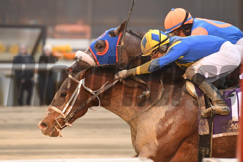Bank On Shea wins the 2019 New York Stallion Series Stakes<br /> Coglianese Photos/Joe Labozzetta