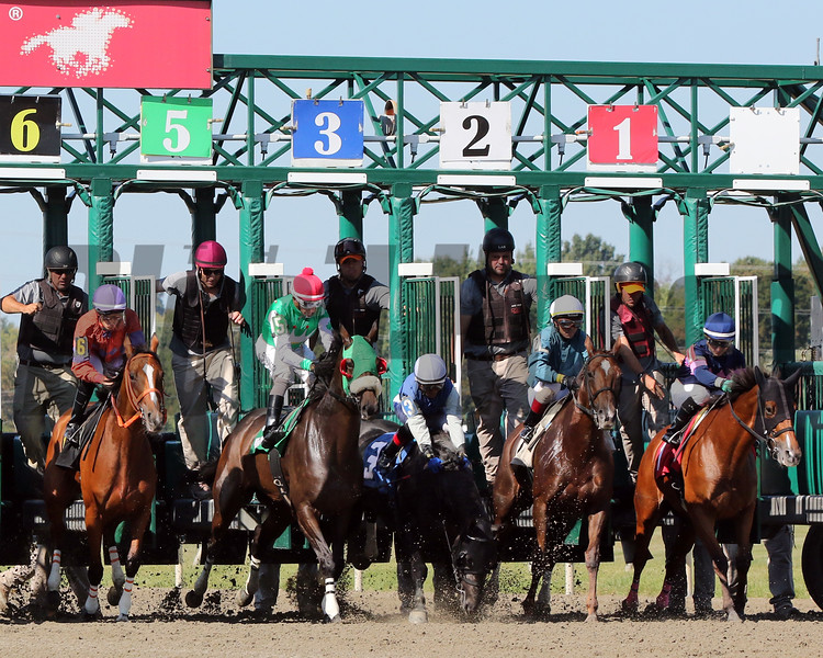 Trolley Ride (#3) with Maicol Inirio stumbble at the start of the Plum Pretty at Parx on September 21, 2019. Phtoo by: Chad B. Harmon