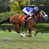 Captain D wins the 2019 Juvenile Turf Stakes at Gulfstream Park West<br /> Coglianese Photos