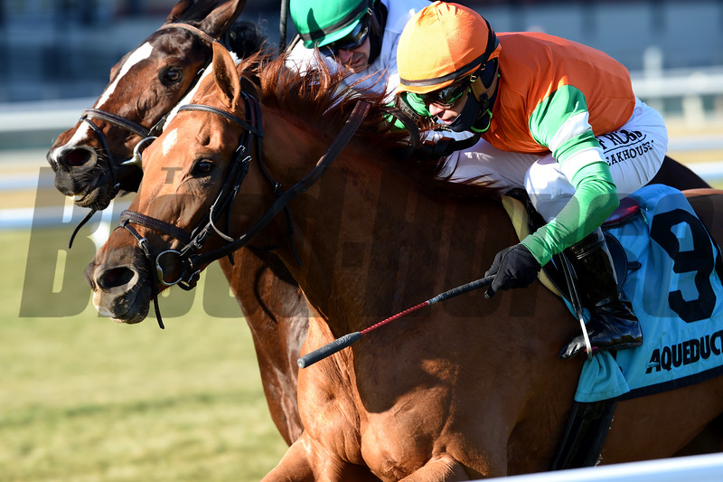 Andina Del Sur wins the 2019 Forever Together Stakes at Aqueduct<br /> Coglianese Photos/Elsa Lorieul