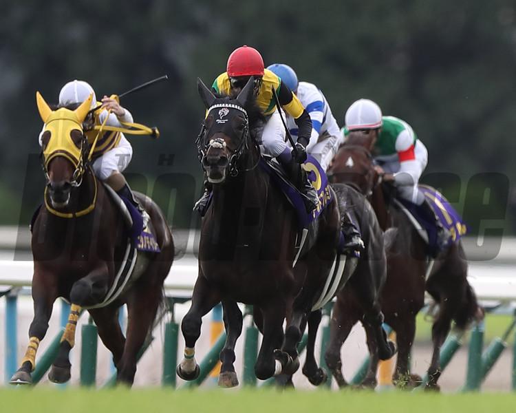 World Premiere wins the 2019 Kikuka Sho at Kyoto Racecourse. Photo: Masakazu Takahashi