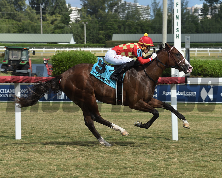 Graceful Kitten wins the 2019 Armed Forces Stakes at Gulfstream Park<br /> Coglianese Photos/Lauren King