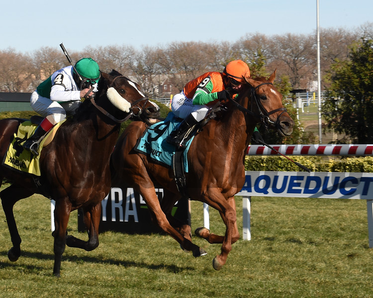 Andina Del Sur wins the 2019 Forever Together Stakes at Aqueduct<br /> Coglianese Photos/Chelsea Durand