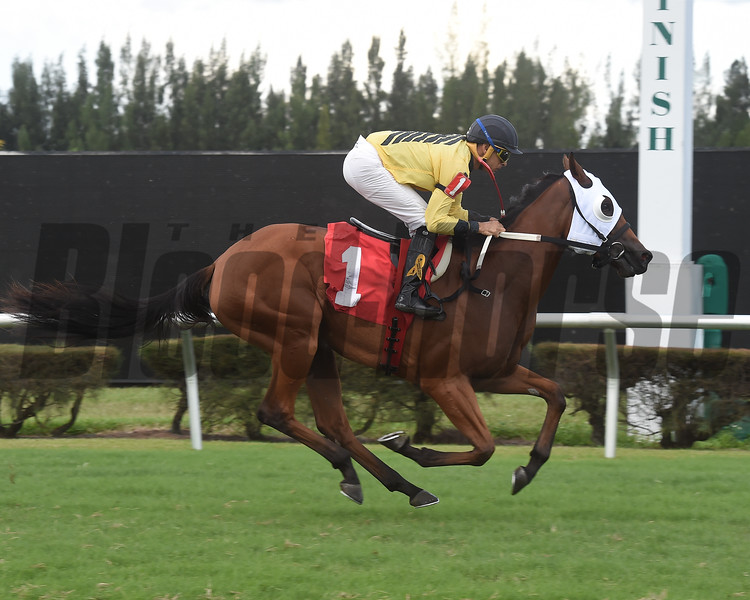 Lasting Joy wins a maiden claiming race October 9, 2019 at Gulfstream Park West. Photo: Coglianese Photos/Lauren King