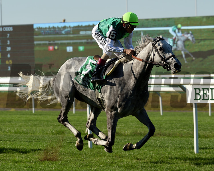 Significant Form wins the 2019 Noble Damsel Stakes at Belmont Park<br /> Coglianese Photos/Janet Garaguso