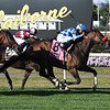 Neptune's Storm wins the 2019 Hill Prince Stakes at Belmont Park<br /> Coglianese Photos/Susie Raisher