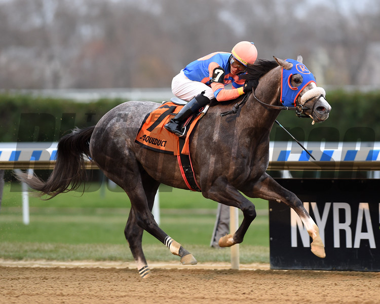 Dream Bigger wins the 2019 Notebook Stakes at Aqueduct. Photo: Coglianese Photos/Chelsea Durand