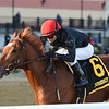 Performer wins the 2019 Discovery at Aqueduct<br /> Coglianese Photos/Chelsea Durand